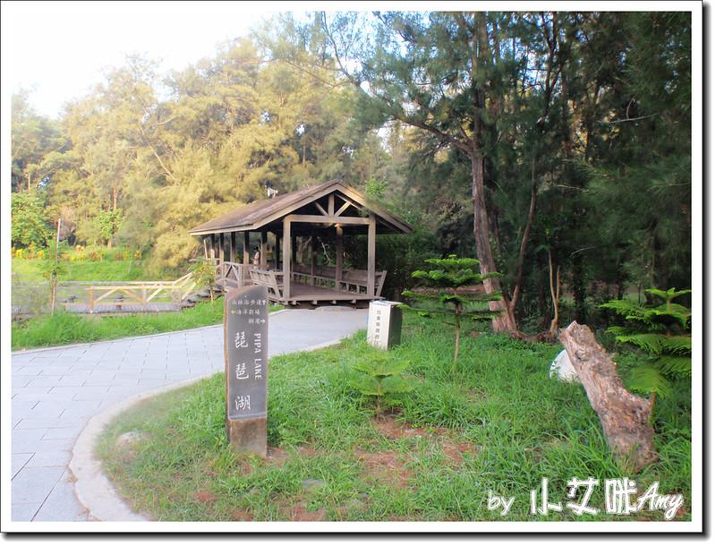台東黑森林琵琶湖P7242401