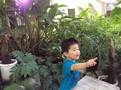 ジャングル探検にGO!@植物センター (2012/5/19)