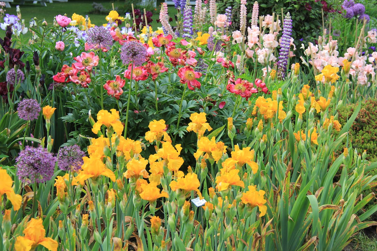 Oregon Hikers View Topic Schreiner 39 S Iris Gardens In