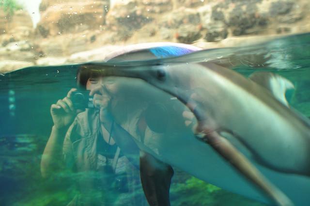 Osaka Aquarium4Osaka Aquarium Kaiyukan
