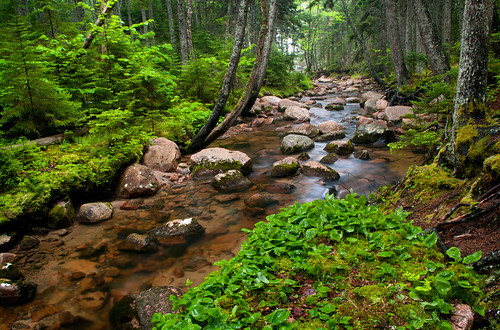 green nature island stream maine vegetation verdant brook lush acadia riverrocks mountdesertisland mdi acadianationalpark coastalforest huntersbrook