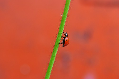 Journey of a Ladybug; to be continued..,