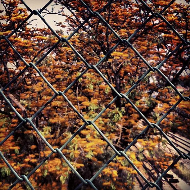 Rede com árvore por trás