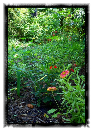 My butterfly garden is looking good!
