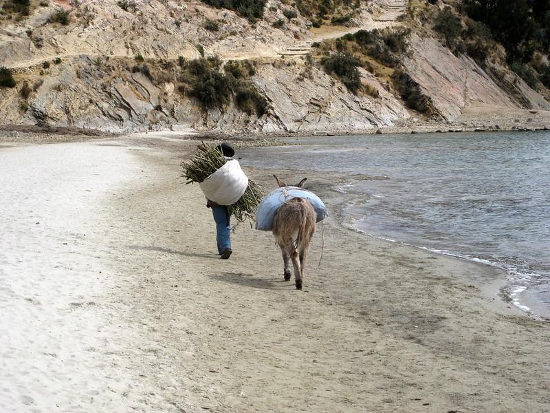 Man & Donkey - Isla Del Sol - Lake Titicaca - Bolivia