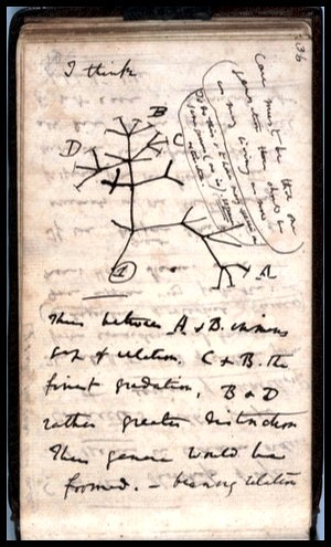 Darwin's notebook by ConserVentures