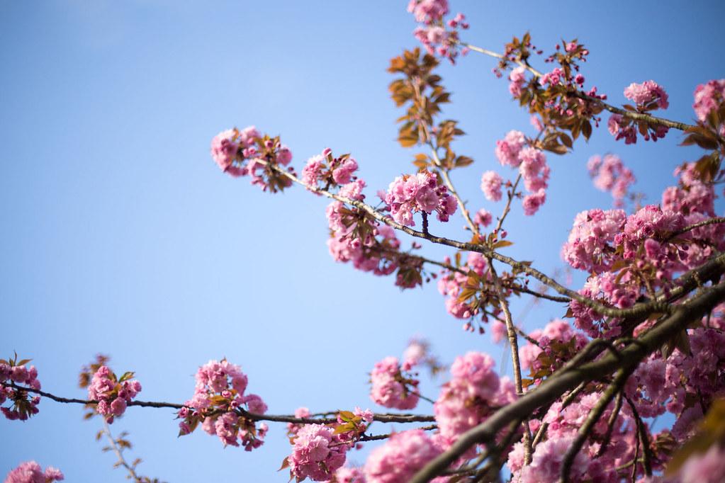 Spring spring spring