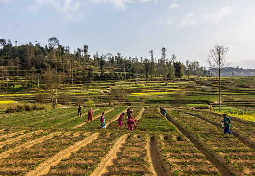 travel nepal landscape village farming terraces streetphotography countries streetphoto agriculture southasia kathmanduvalley travelphotography panauti centralregion