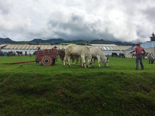 Tierra Blanca: foire aux bestiaux