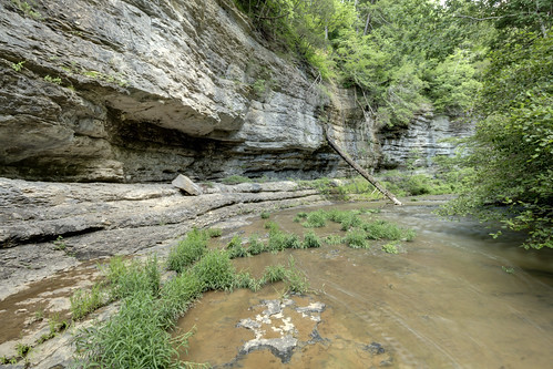 Fort Payne formation outcrop, Taylor Creek, White County, Tennessee 2