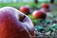 Perspectiva de Manzanas Rojas