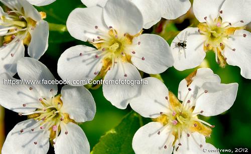 La vida secreta de las flores