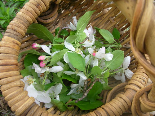 Apple Blossoms, Twigs and Leaves