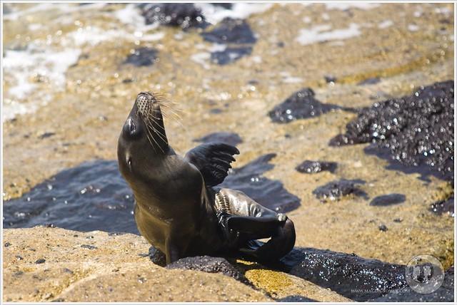 2012 03 19_Magda i Tomek Dookola Swiata_Galapagos_DSC_0223