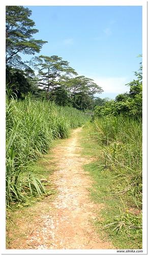 Bukit Timah Walk 11