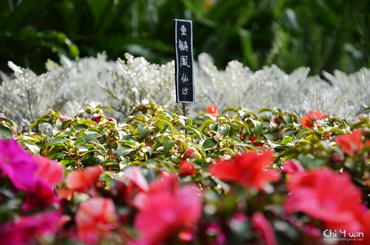台北花卉村-花17.jpg