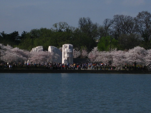 Cherry Blossoms and MLK