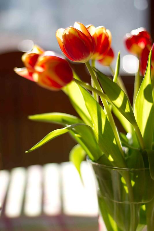 grandma flower's flowers