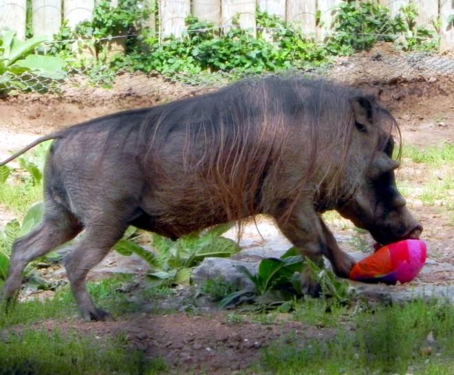 04-07-2012_Warthog