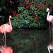 Flamingos rosa e vermelho - Foto: Rê Sarmento