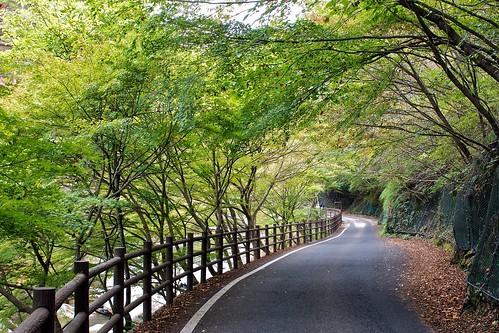 voyage park city trip travel light green nature japan forest river nikon asia hiking path foliage business national gorge nikkor prefecture foret mitake f28 nihon yamanashi arakawa kofu 2470mm shosenkyo