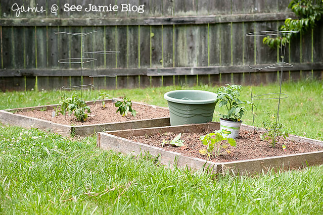 Veggie Garden May 2012