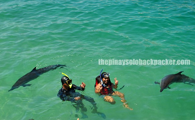 dolphin island ozamis photo