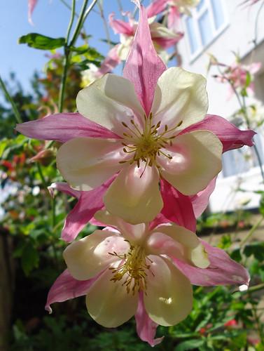 pretty pink fleurs
