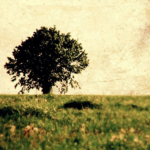 無料写真素材, 自然風景, 樹木, 草原