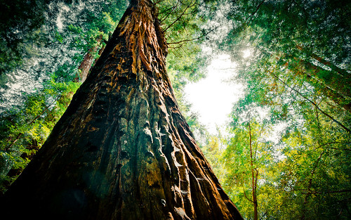 無料写真素材, 自然風景, 森林, 樹木, 人物  樹木