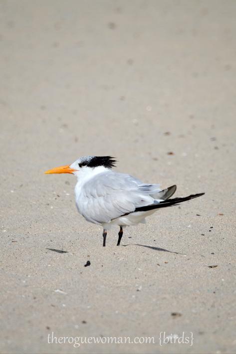 051912_bird_elegant