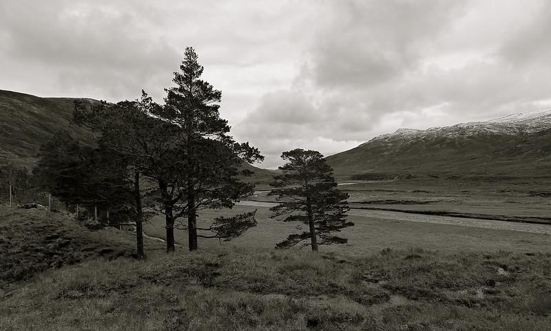 Trees in Glen Orrin