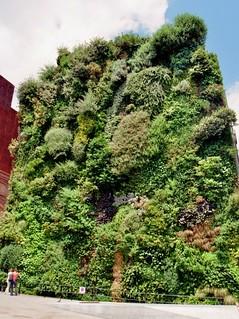 Mur végétal (2004) du Musée du quai Branly, Paris VIIe | Flickr