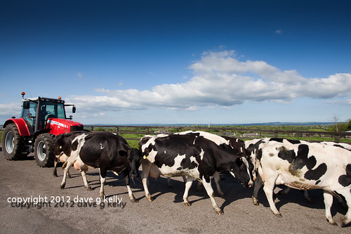 Traffic Jam Irish Style