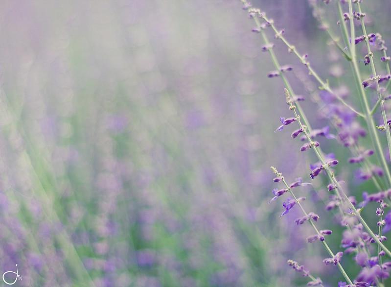 IMAGE: http://farm8.staticflickr.com/7231/7363306600_b02838eca5_c.jpg