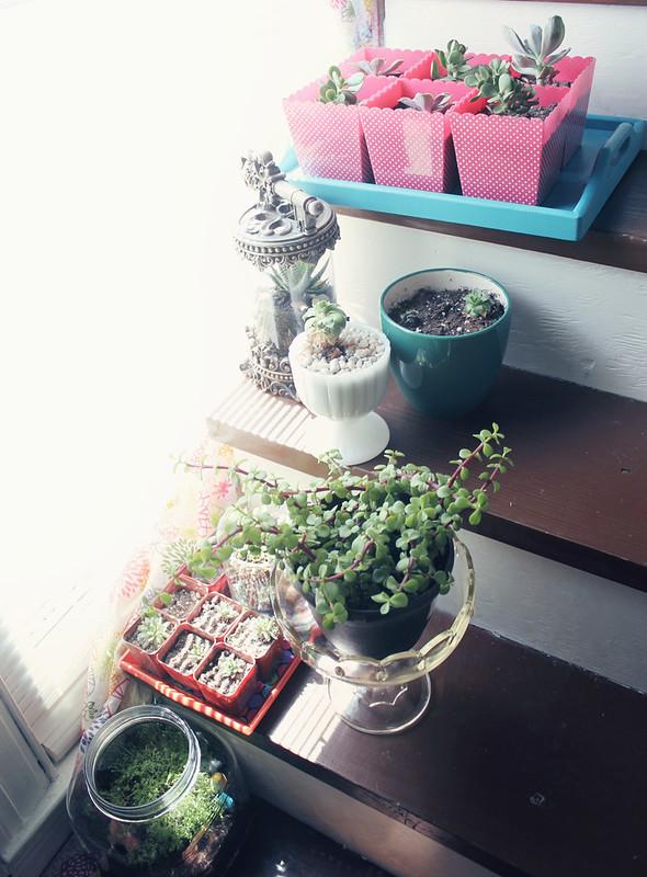 plantsontrays