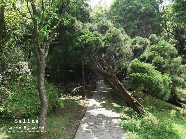 陽明山踏青一日遊景點 (38)
