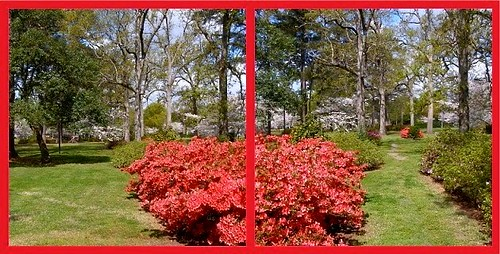 park pink trees sc grass collage garden asian spring diptych landscaping camden mosaic pair south lawn double paths azalea shrubbery 2012 hamptonpark mystuart