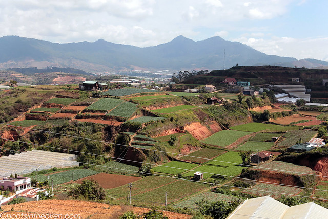 Vegetables growing outside Dalat