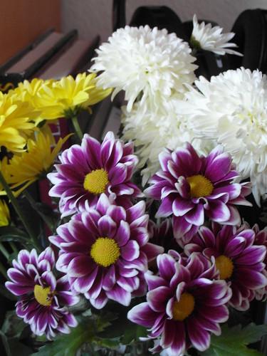 Blumen, Natur und Menschen tanken im Frühjahr wieder Energie und Motivation! Die Blumen die unsre Seele im feinen Seidenflor des Frühlings besonders entzücken 437