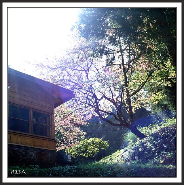 2012~很硬的阿里山賞櫻行~
