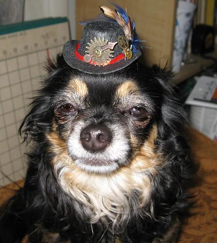 Tiny Top Hat