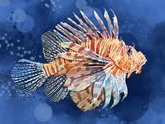 [免费图片素材] 图形, 插图, 图形 - 动物, 獅子魚 ID:201205140400