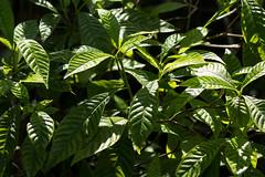 Fern Forest 2-029.jpg