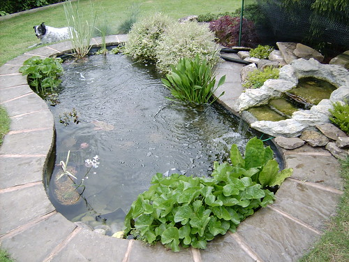 Preformed waterfall your pond forum pond life for Preformed pond