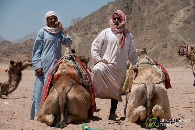 Bedouin Men with Camels - Hurghada, Egypt