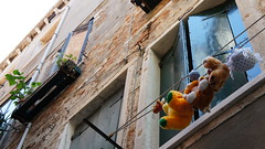 Drying Plushes in Venice