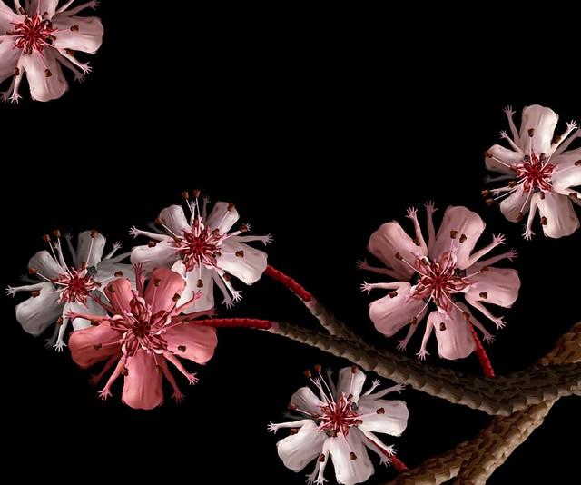 Cheerry Blossom