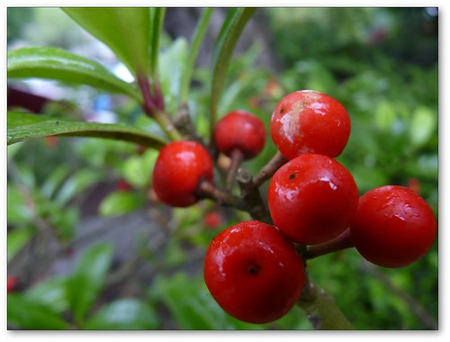 Six Red Berries
