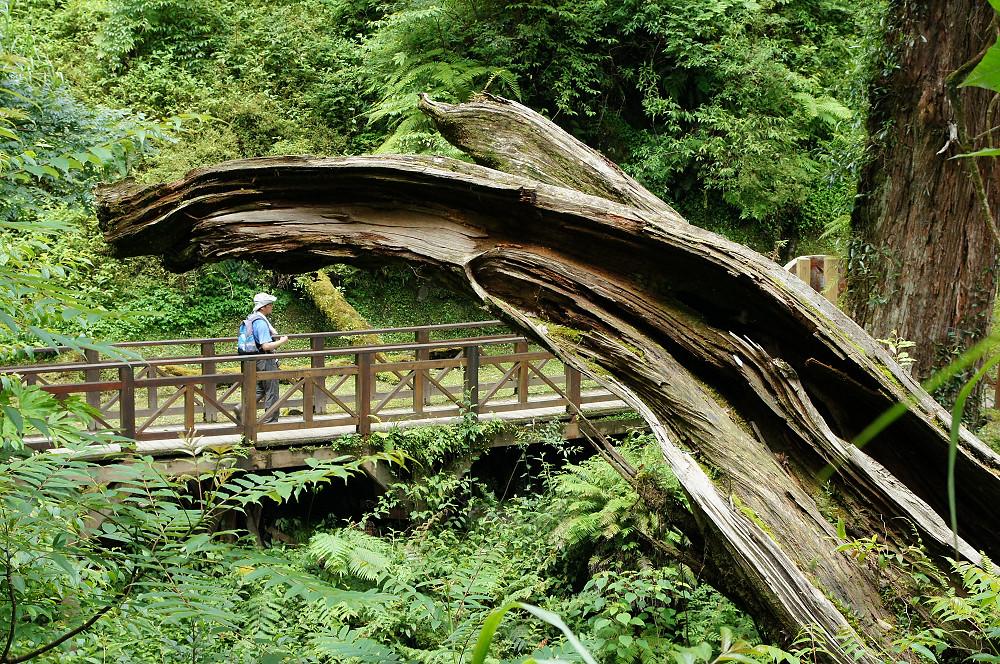 巨木群,與往拉拉山的路上-077